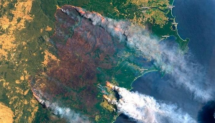 گرمایش جهانی و جنگل ها