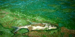 آلودگی آب با مواد مغذی